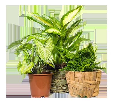 foto-piante-verdihome