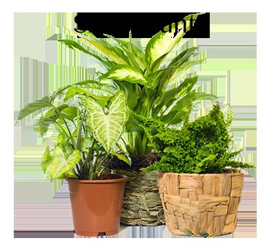 foto-piante-verdihomeshop